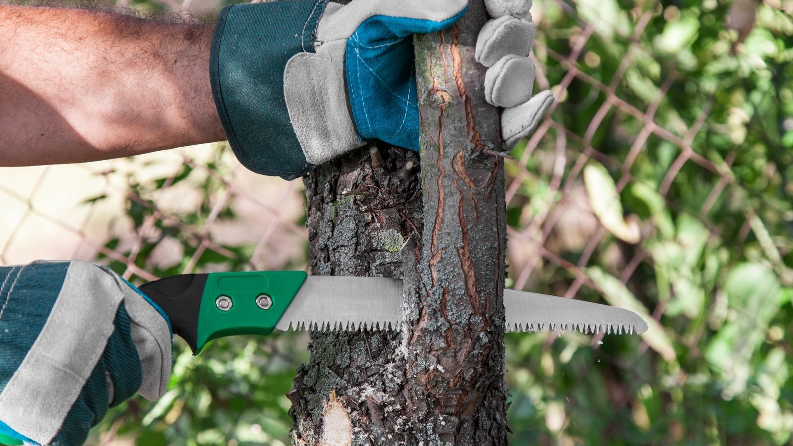 pruning tree with saw