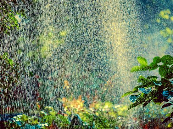 Sprinkler on flowers