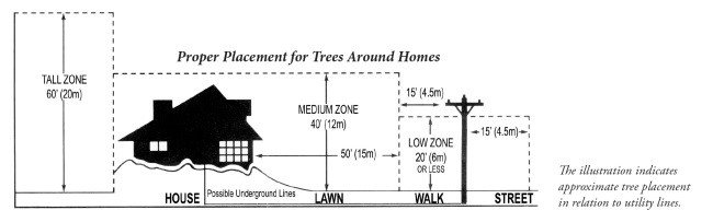 Diagram of where to plant tree