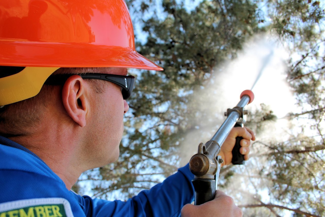 Arborist spraying tree treatment