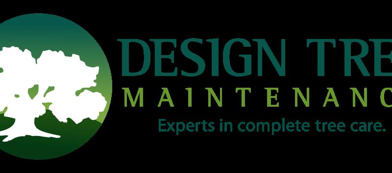 Design Tree Arborist Phoenix Logo