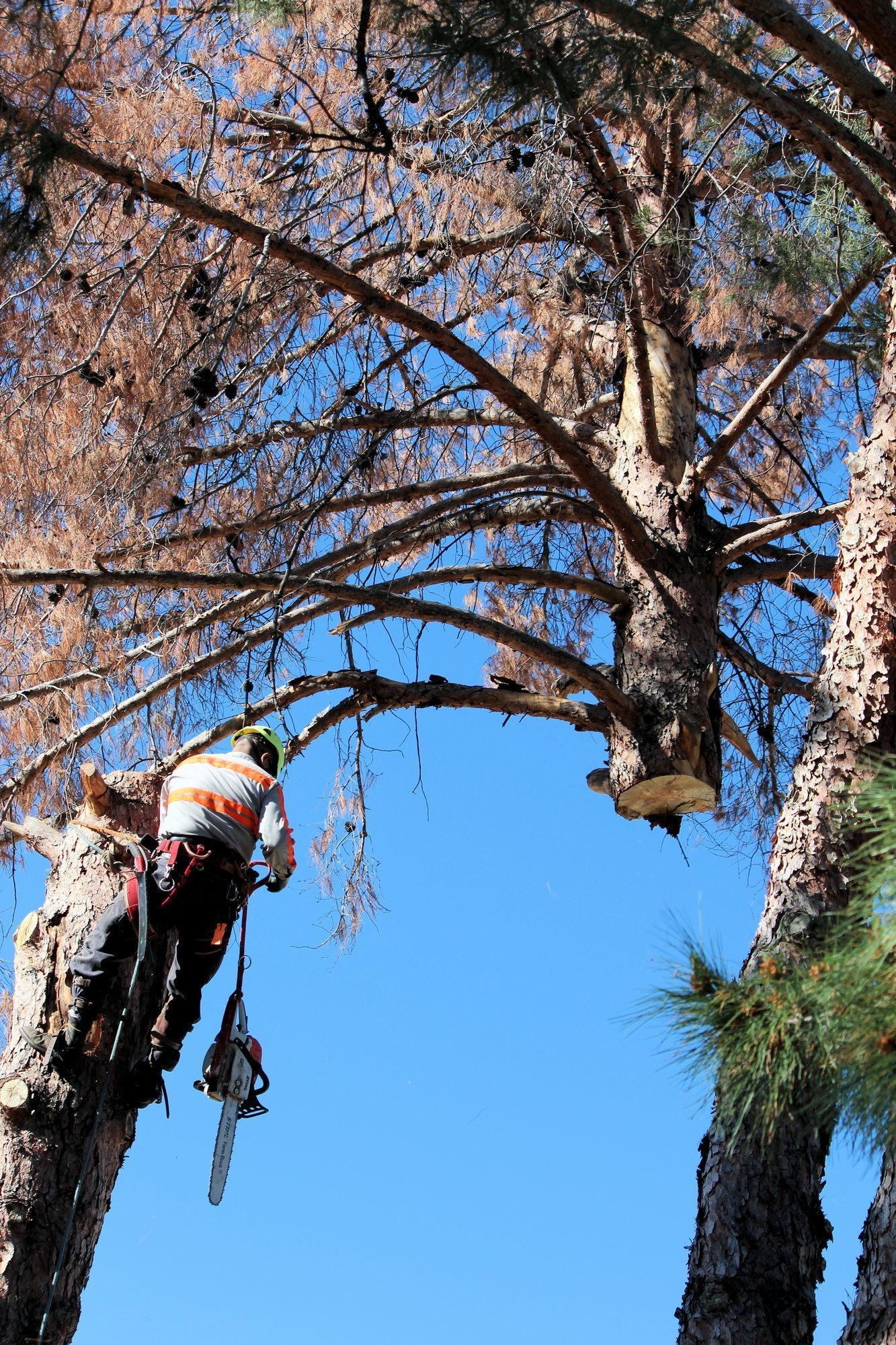 Top of Tree Removal In Phoenix